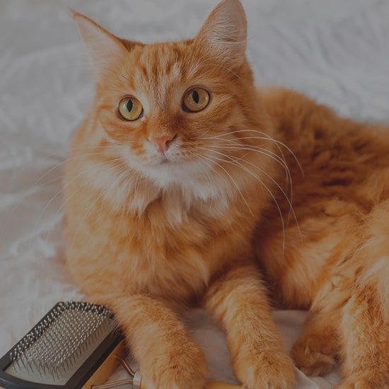 вичісування ковтунів у кішок