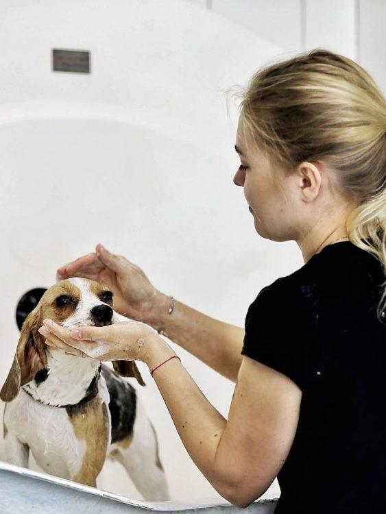миття собак