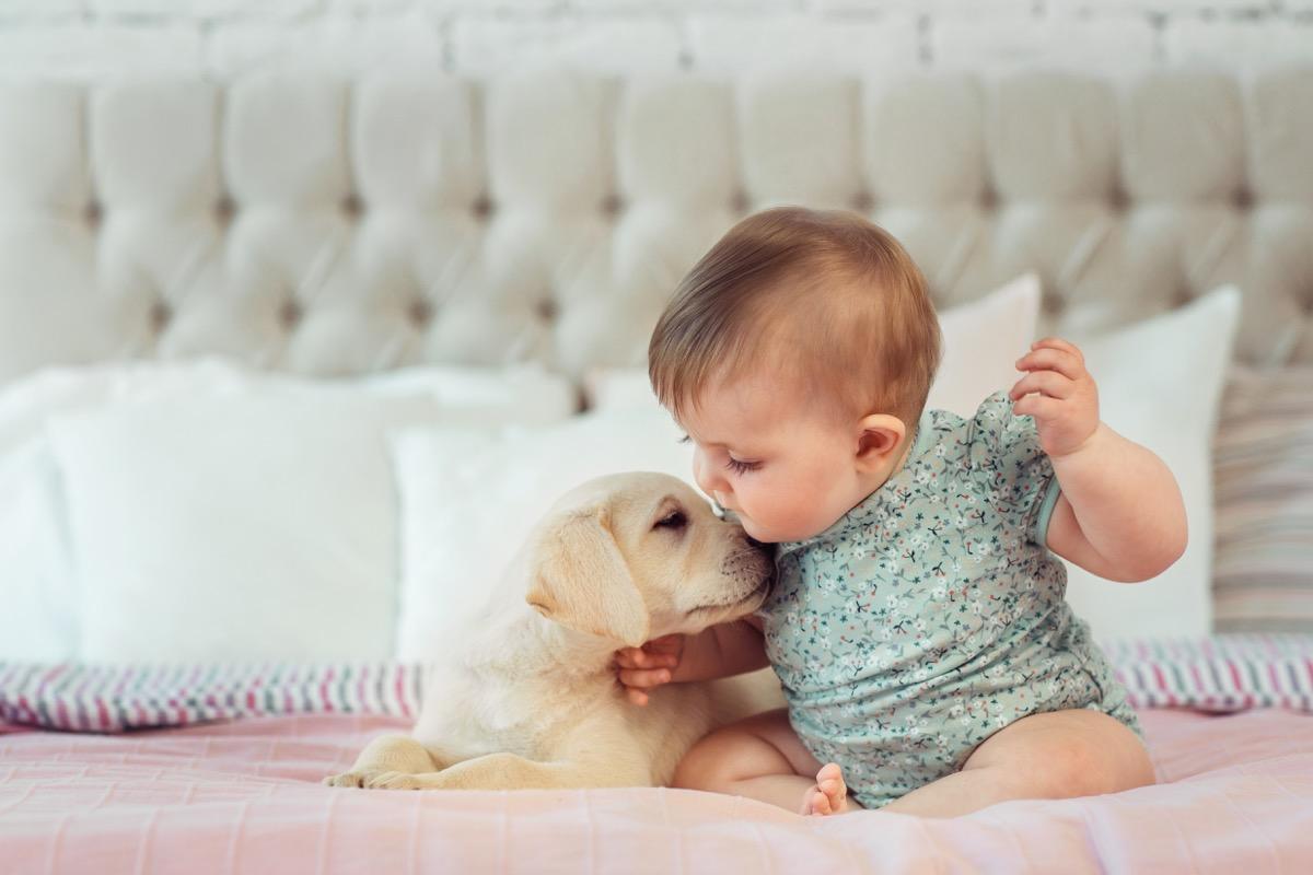 Собака заспокоює немовля BarberPet