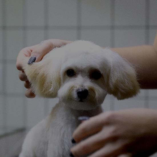 гигиенический уход за собаками
