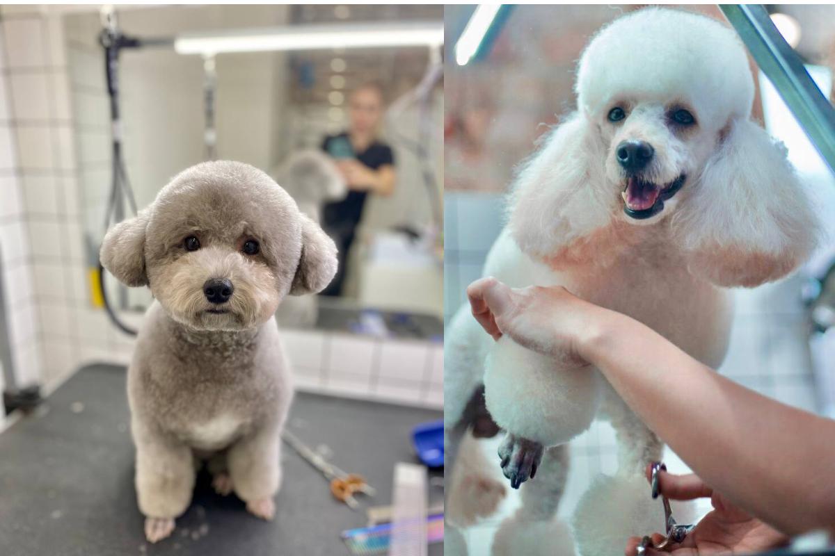 Стрижки пуделя Barber Pet