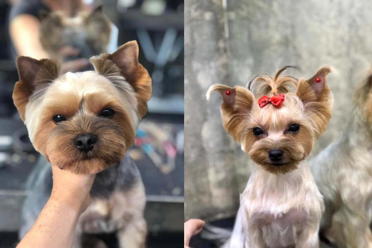 Стрижки йорков Barber Pet