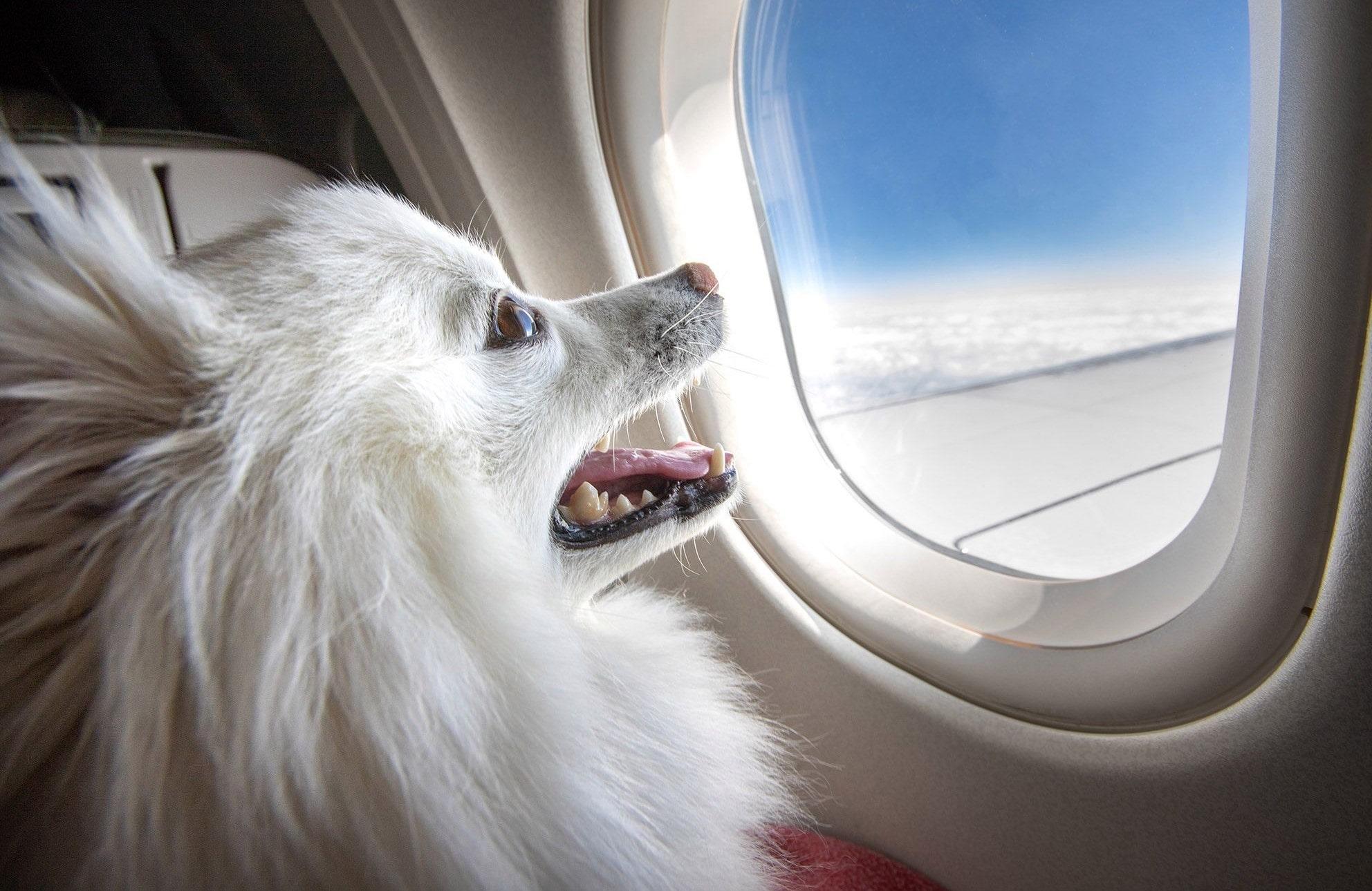 Как летать с собакой за границу