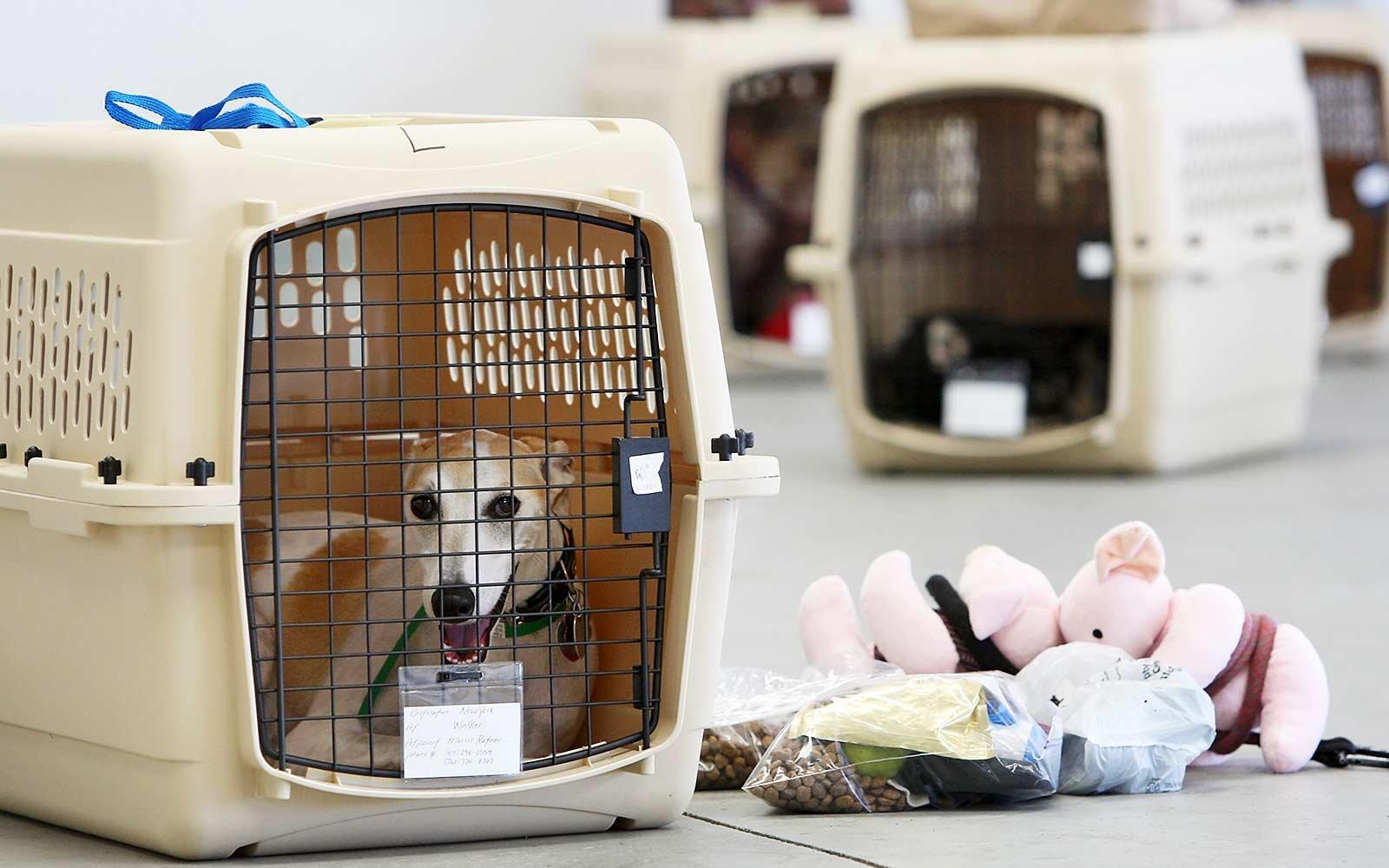 Действия с собакой в аэропорту