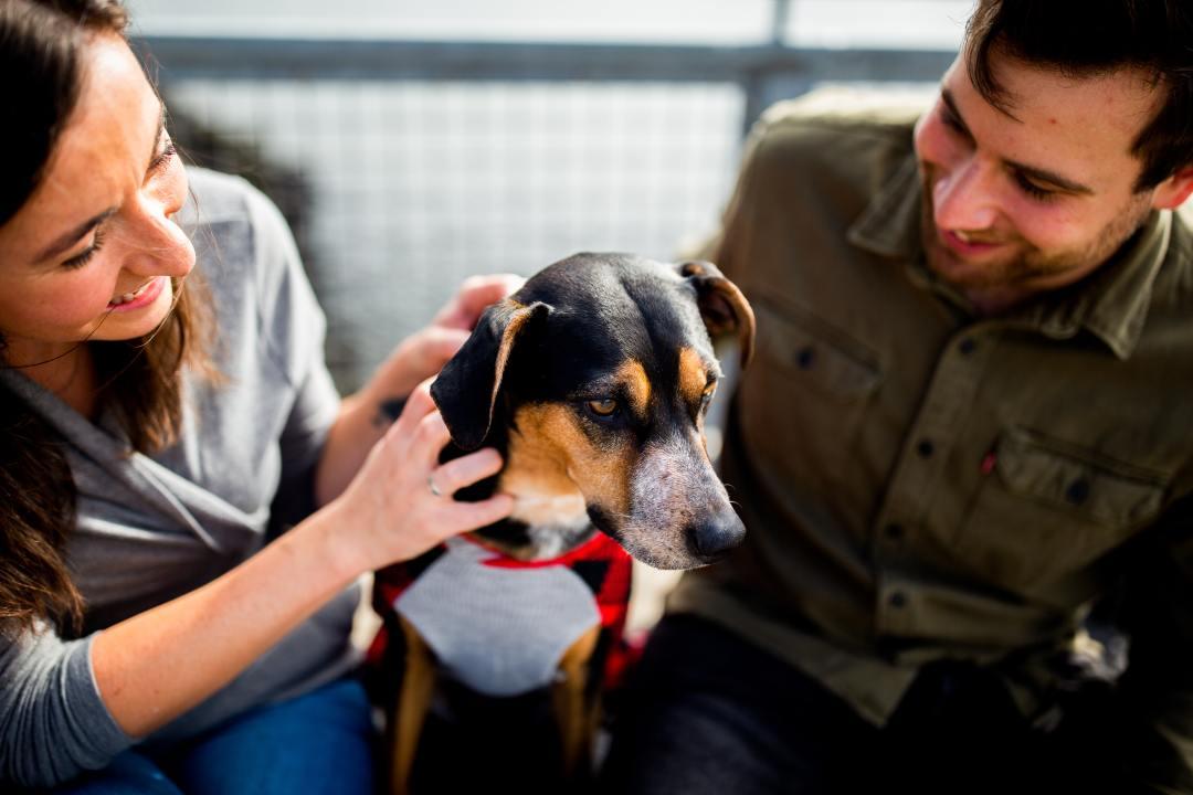 6 причин завести собаку Barberpet