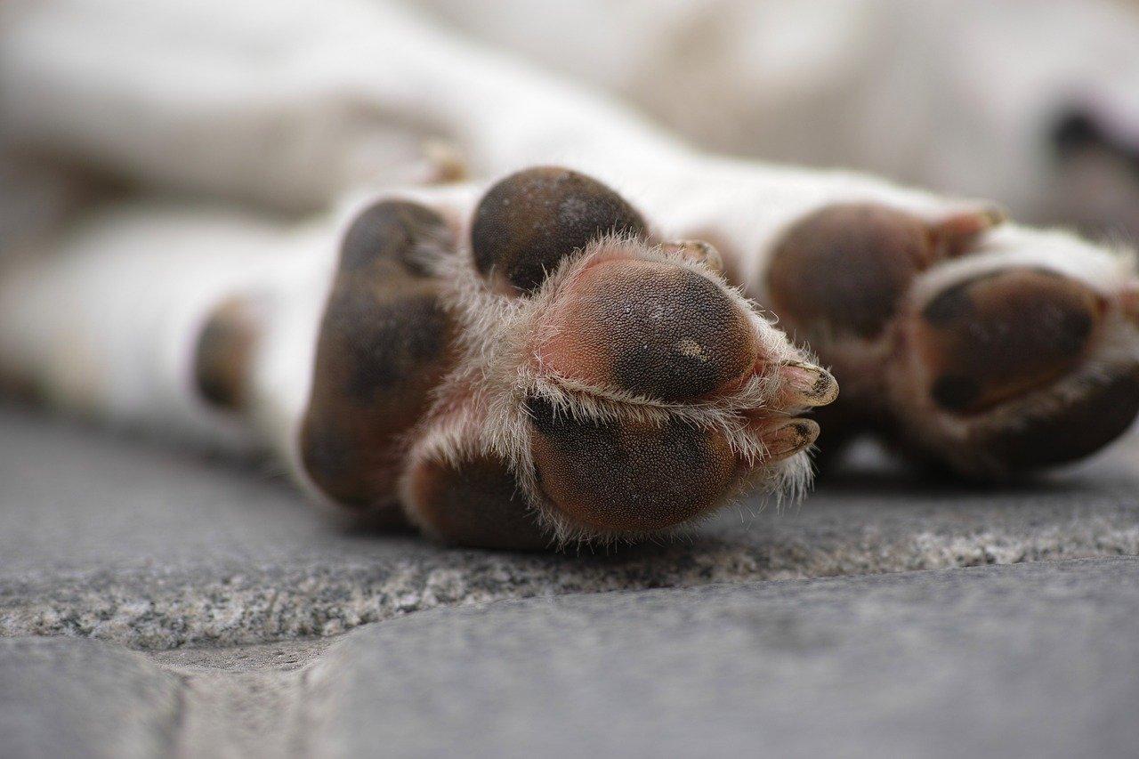 Почему важно следить за чистотой и сухостью лап у собаки?