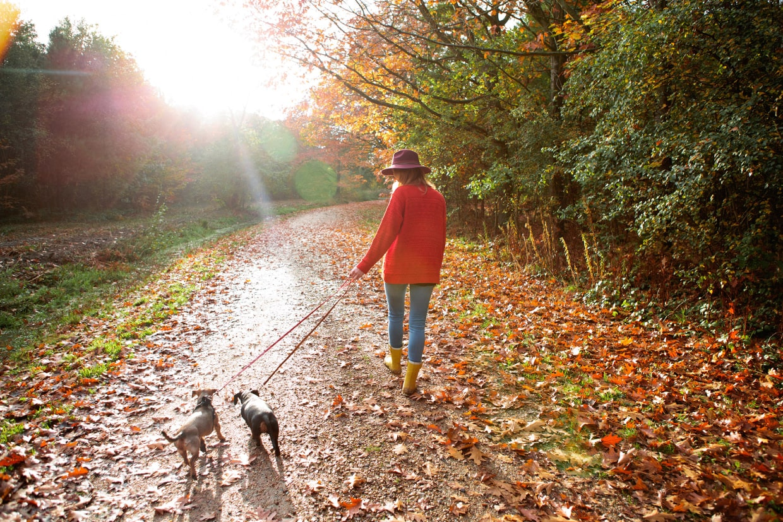 6 советов о прогулках с собакой осенью