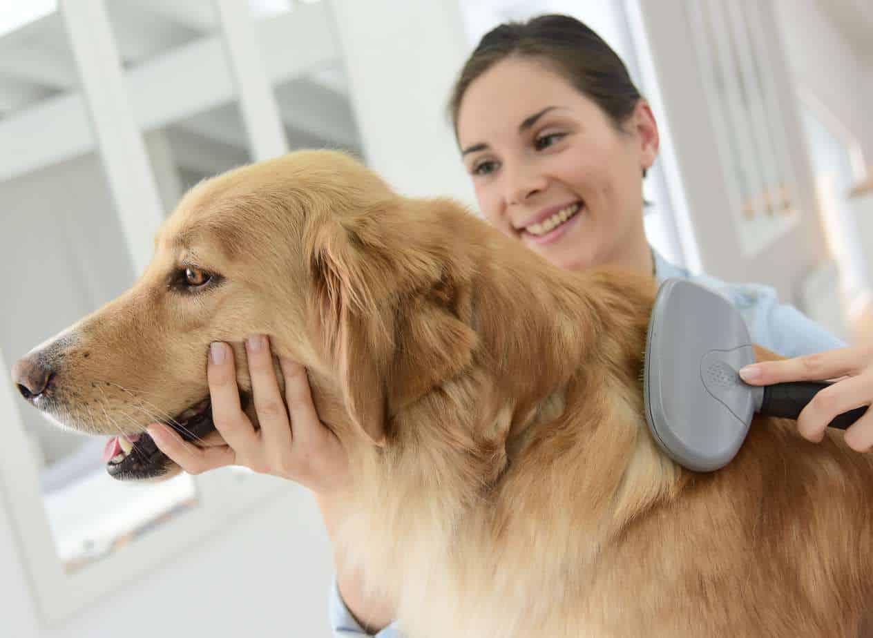 Как справиться с линькой собак